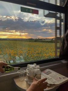 Solrosfält från tåget foto Maria Unde Westerberg