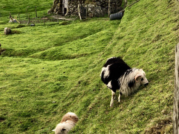 Gröna Färöarna tog plats i mitt hjärta
