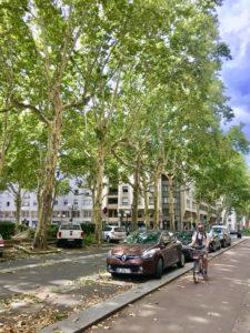 Gator kantade av lindar och plataner i Lyon