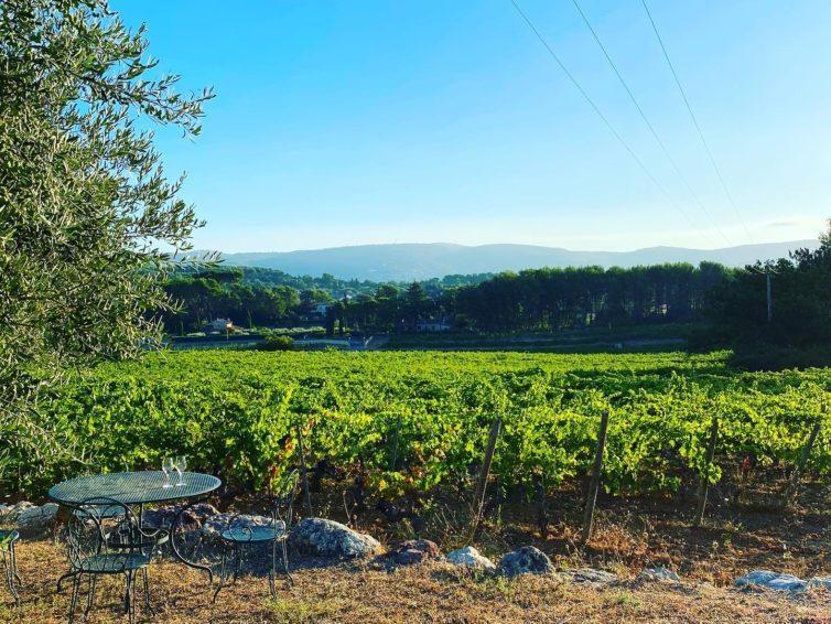 Vi ska plocka druvor i Provence!