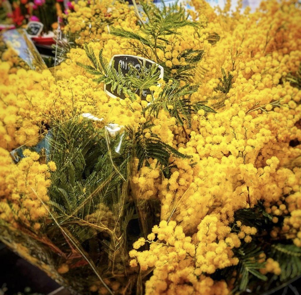 Mimosa ger Rivierakänslan foto Maria Unde Westerberg